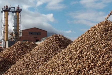Türkiye Şeker Fabrikaları'nın bir yıllık zararı 100 milyon lira