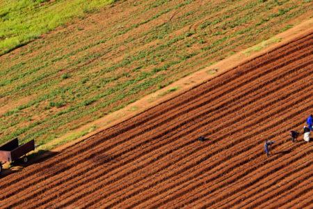Krizdeki çiftçiler tarlalarını satıyor