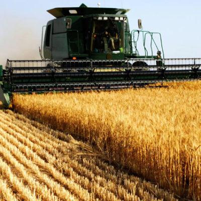 Ekim alanları yüzde 60 azaldı, Hollanda büyüklüğünde toprak nadasa bırakılıyor