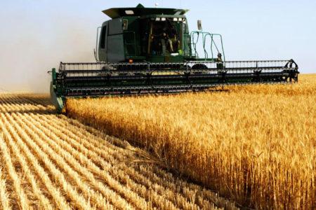 Rus Bakan: Rus buğdayına uygulanan kısıtlama kalktı, Türk domatesi 3 yıl daha yasaklı