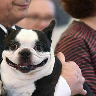 Finlandiya Devlet Başkanı'nın gülümseyen köpeği sosyal medyanın gündeminde