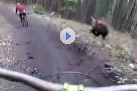 Ormanda ayı ile karşılaşan bisikletçilerin zor anları