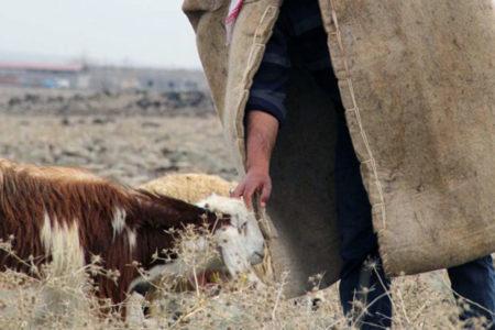 Askeri operasyonlar nedeniyle yaylaları yasaklanan köylüler göçe zorlanıyor