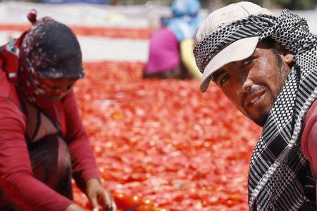Yerli işçiye 70, Suriyeliye 37 TL yevmiye