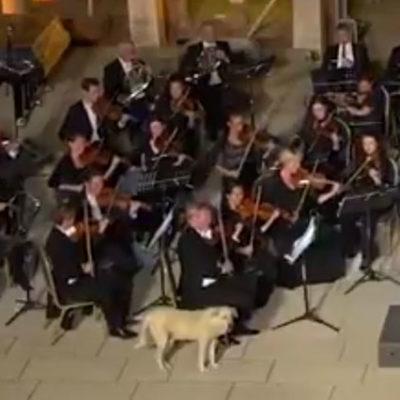 Efes'te, 'sanatsever' bir köpek, klasik müzik konserine katıldı