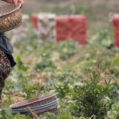 Patates üreticisi, ürünler çürümesin diye maliyetinin altına satış yapıyor