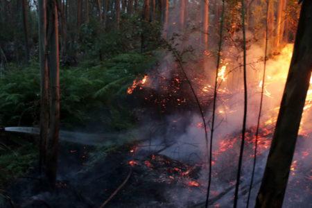 Portekiz'deki orman yangınında 62 kişi hayatını kaybetti
