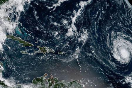 Irma Kasırgası'nın ardından balık ve karides sayısında büyük artış