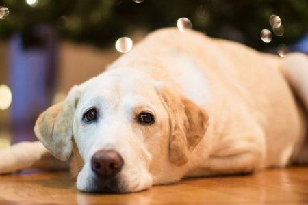 Köpeği hastalandı, işe gitmedi, dava açtı, hakim 'ailevi sebepler' nedeniyle izin parası ödenmesine hükmetti