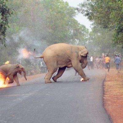 Yakılan yavru fil fotoğrafına ödül verildi