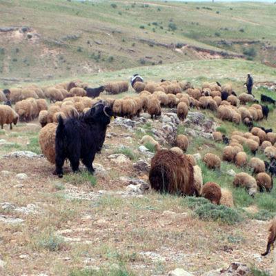 """""""Yaylalarımızı yasakladılar, köylerimizden çıkardılar, şimdi de ithal et getirdiler"""""""