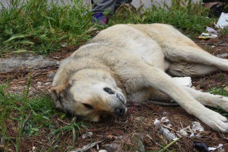 Onlarca kedi ve köpek cesedi bulundu