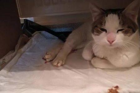 Meral Akşener, tecavüze uğrayan kediyi sahiplendi